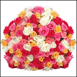 Click here for more on 100Mixed Roses