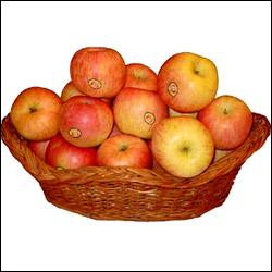 Fresh Apple Basket - 12no